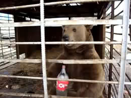 bear-behind-bars