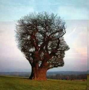 human-tree