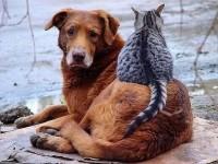 5 самых полезных животных для человеческого здоровья